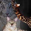 Питомник бенгальских кошек Benganelio Харьков