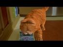 Гарфилд (2004) HD 720