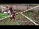 Что делает пес, цирк отдыхает