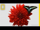 Watch a Delicate Dance Between Flowers and Insects   Short Film Showcase