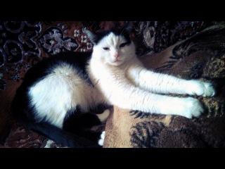Смешные Кошки И Котики От Семена Алисы #50
