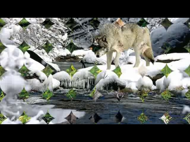 Одинокая волчица Белый Орёл