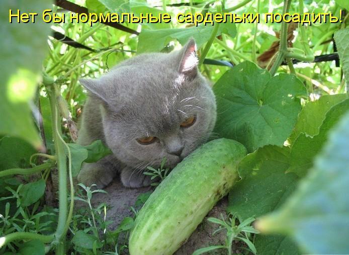 коты и цветы - Страница 2 XvLvNV_Q6zY