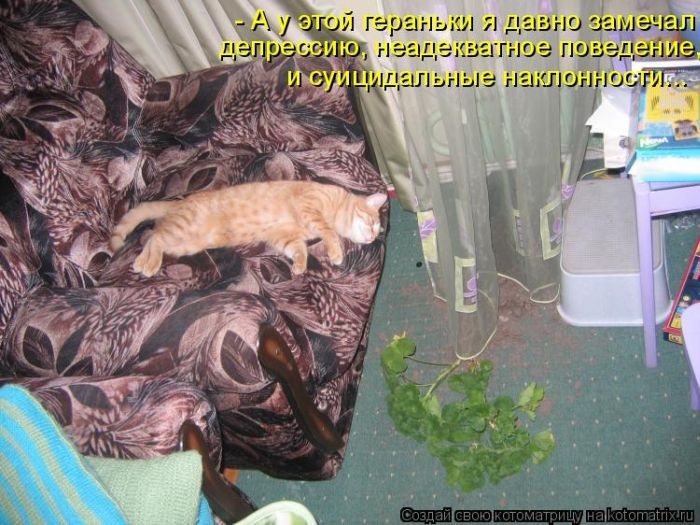 коты и цветы - Страница 2 2K3XRP2kVOI