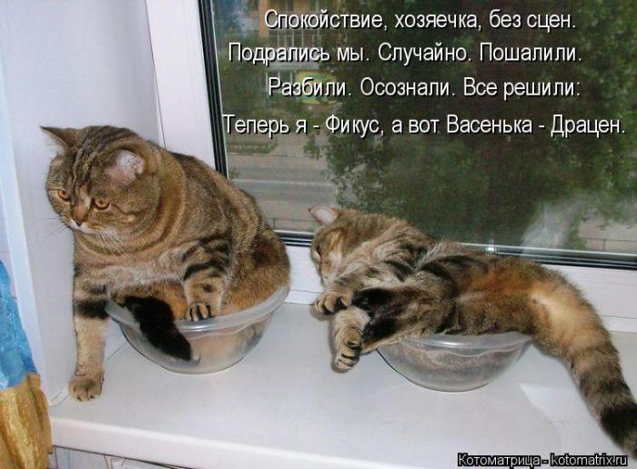 коты и цветы - Страница 2 LeIpfHIYPaQ