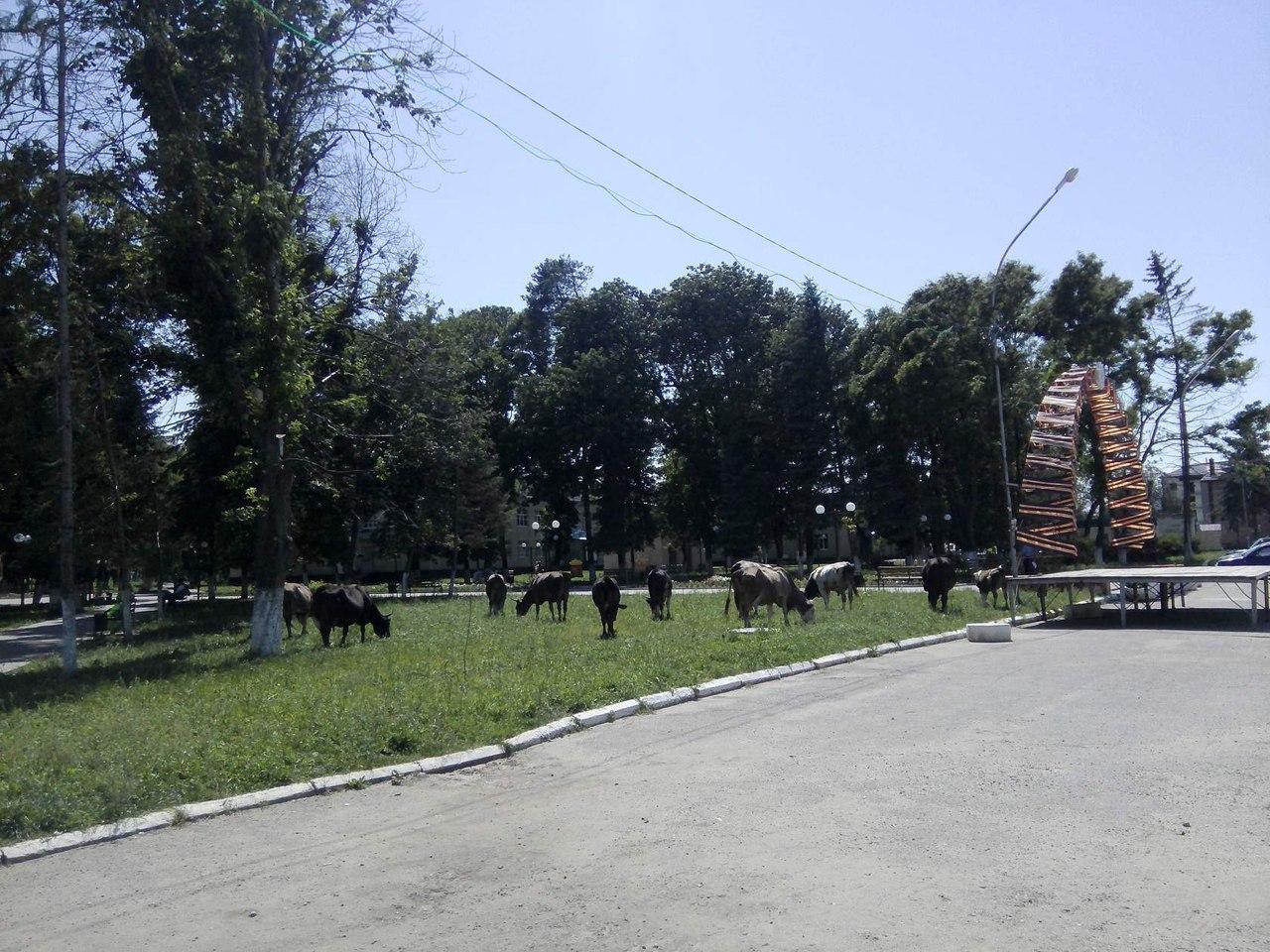 «Народный» парк станицы Зеленчукской превращается в пастбище