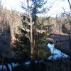 Река Смородинка. Отстоим ЗАЩИТНЫЕ леса ЦВКП