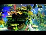 2 Hours of Beautiful Coral Reef Fish, Relaxing Ocean Fish, Aquarium Fish Tank &amp Relax Music 1080p HD