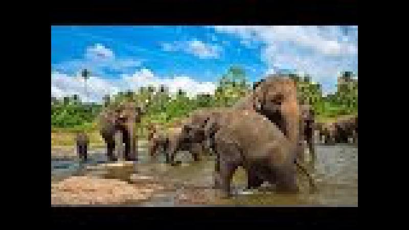 Шри-Ланка. Таинственный остров. Супер фильм.