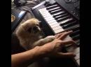 [Haikyuu!! OST] Юки Хаяши: Творческий процесс