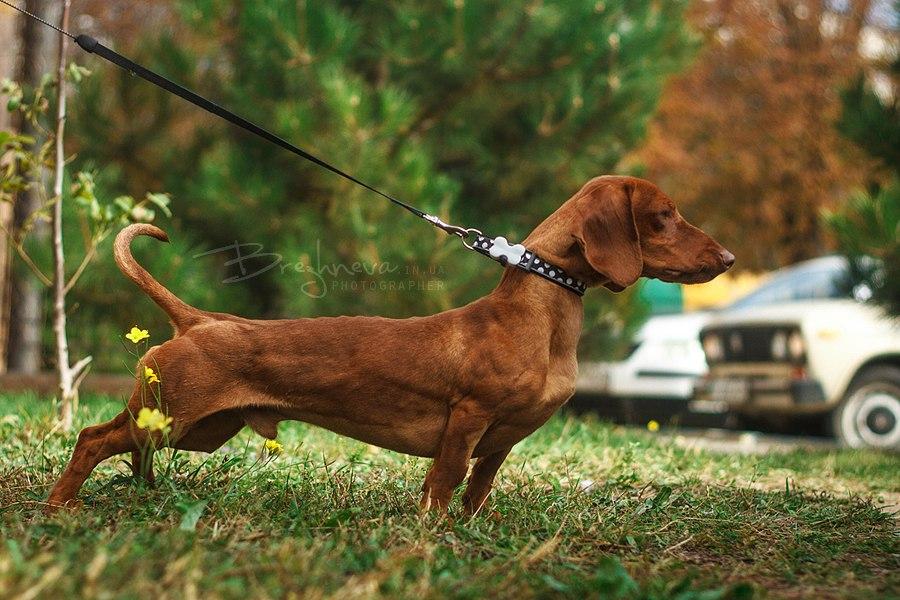 Фото собак в спортивной кондиции - Страница 5 TZvr-lBBsJo