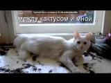 «Приколы с животными для группы:Юмор,смех про животных+Зверополис» под музыку Shakira - песня из зверополиса. Picrolla