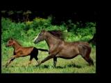 Флейта турецкая музыка Красота и грация лошадей