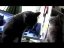 Lustige Katzen beim Hände klatschen