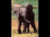 88.Henry Mancini - Baby elephant walk