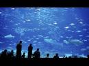 Ворота в удивительный подводный мир океана Аквариум залива Монтерей Дикая природа 25 01 2017