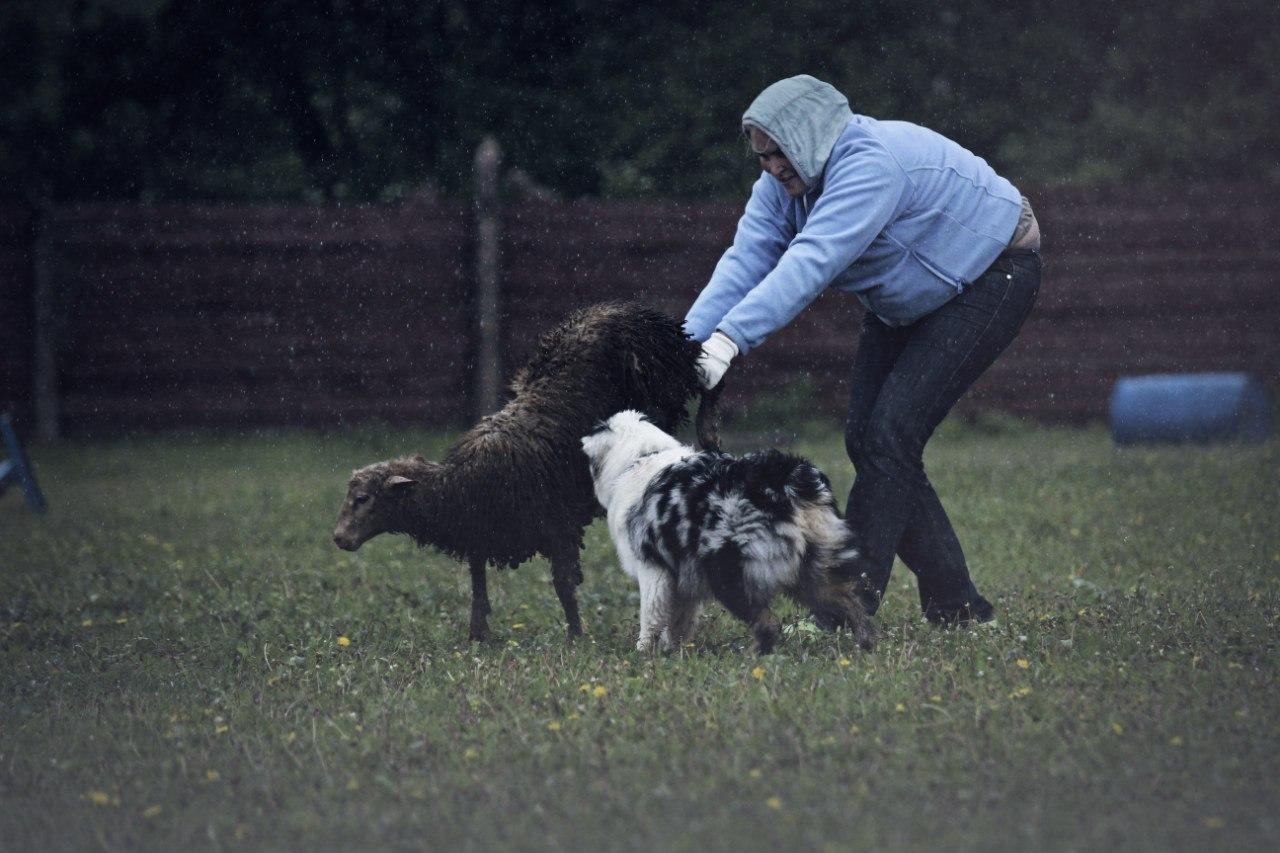 "Австралийские овчарки питомника ""Из дома Королёвой"" VlfsoJzAQaE"