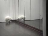 Котик и зеркало