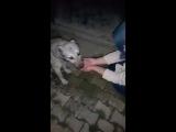 Собака благодарит девушку после того как она помогла ему выпить воду
