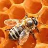 """1.04.2017семинар """"Мой опыт пчеловодства"""""""