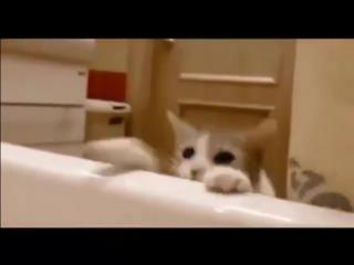 Спасатель с этим котом не пропадешь 😹😹😹