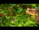 «Мифы леса (2). Борьба за свет» (Документальный, природа, животные, 2009)