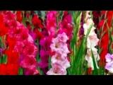 цветы под музыку Шер и Эрос Рамазотти (минус) - Pue que pou (Не со мной). Picrolla