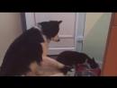 Пёс подгоняет кота у миски с едой ...