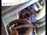 Гнездо с птенцами трясогузки под капотом КамАЗа обнаружили в Ижевске