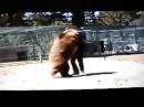 Фатальная атака медведя на человека  Видео нападения  Эти милые забавные дикие ж...