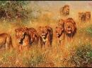 Дикая Пустыня Африки Животный мир Африки lbrfz gecnsyz fahbrb bdjnysq vbh fahbrb
