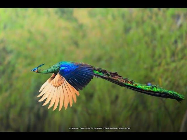 Дикая природа Тайланда часть 22. Документальный фильм National Geographic lbrfz ghbhjlf nfqkfylf xfcnm 22. ljrevtynfkmysq abkm