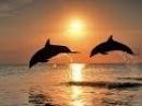 Дельфины. Целебные звуки и песни дельфинов.