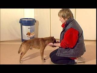 Дрессировка собак дома с нуля - как приручить робкого пса