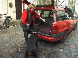 Дрессировка собак дома с нуля - собака в машине
