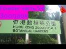 Китай моими глазами - Гонконг часть 5-я (Зоопарк и ботанический сад)