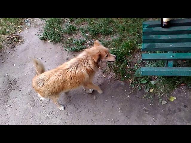 Собака Жжёт.