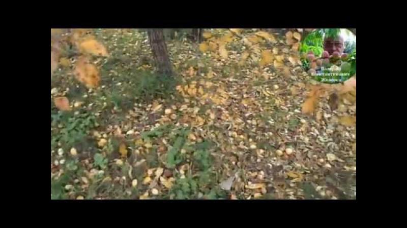 3. Видеоуроки В. Железова №2. Не губите дерева!