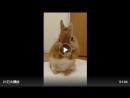 Как заяц умывается - хаааа Очень круто!