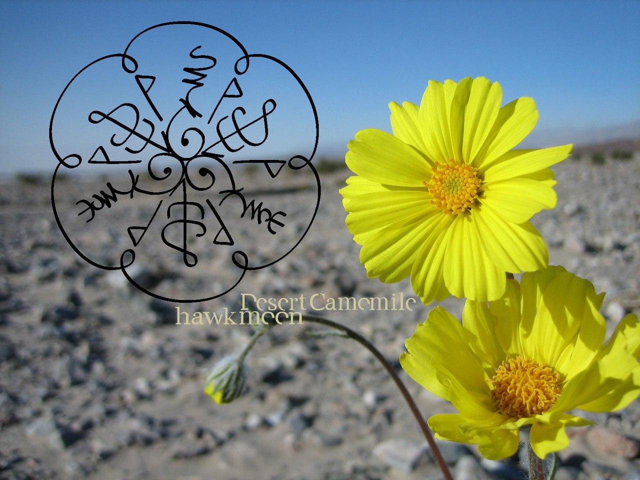 Ромашка Пустыни (привлечение партнеров, клиентов, приворот, морок). PiVT7H_6JgQ