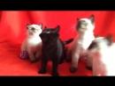 Синхронные котята.