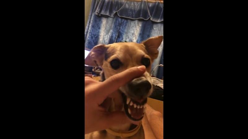 Бешеный пёс (Ля ля аля ля ля аааа ляяя)