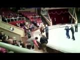 Пьяный мужик устроил представление в цирке Луганска
