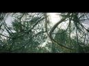 BV cam_test 003(forest)
