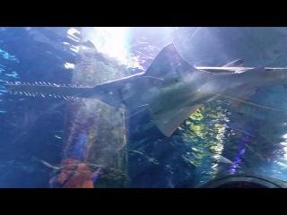 Туннель в океанариуме Sea Life