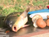 Рыбные котлеты из карпа с грибами и овощами - рыбацкий рецепт рыбных котлет на пр...