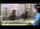 История морали Что будет если 2 обезьянам несправедливо заплатить за работу Фр