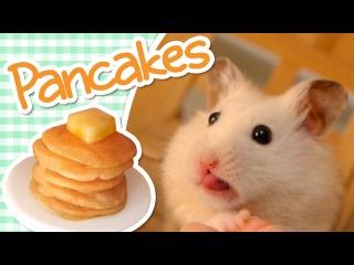 🥞 Pancakes   HAMSTER KITCHEN 🥞