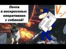 Почта в воскресенье от Matimi0 - Оперативник с собакой и другое/Sunday Mailbox