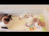 Cat Mom Talking to Her Kittens